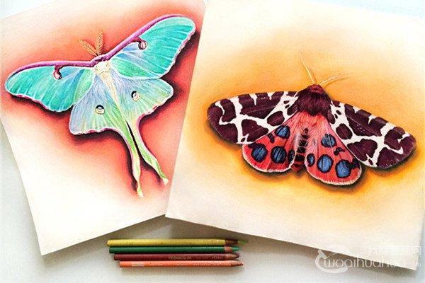 美国女艺术家Morgan Davidson逼真彩色铅笔画欣赏