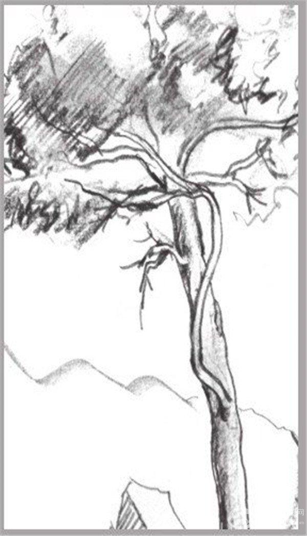 5、添加后面景物的轮廓线,注意线条的弯曲变化和立体感的表现。  速写松树的绘画步骤教程五  速写松树的绘画步骤教程-1 6、添加画面的明暗及阴影,画阴影时要注意线条和树的区别。  速写松树的绘画步骤教程六 7、完成画面的绘制,注意对画面整体感的把握。  速写松树的绘画步骤教程七 树干因各自的树种不同,除了姿态各异之外,在纹理上也各有自己的特征,作画时要特别留意。