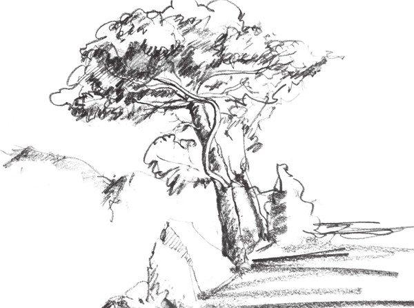 速写松树的技法步骤教程(2)图片