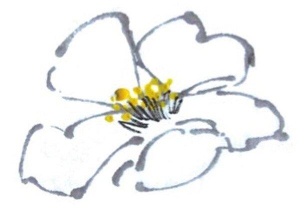 国画山茶花的绘画技法(3)