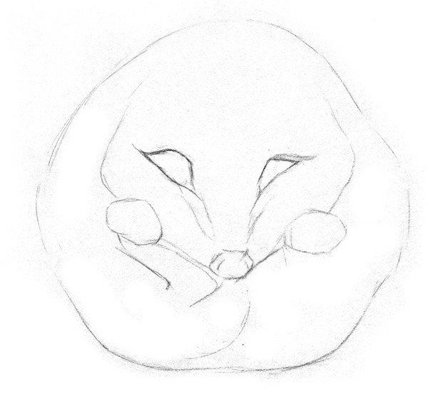 素描小刺猬的绘画步骤二