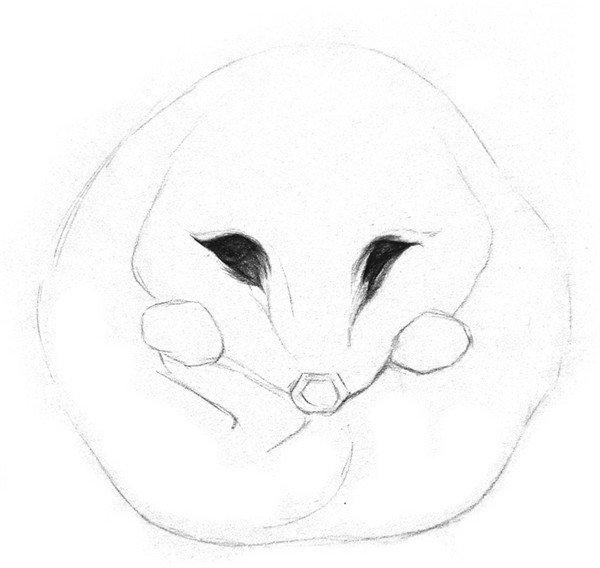 各种动物的眼睛配对图片简笔画