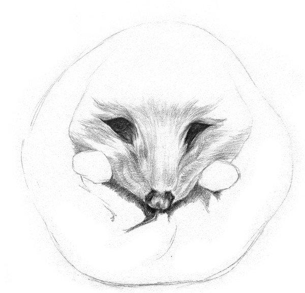 素描动物 > 素描小刺猬的画法(3)