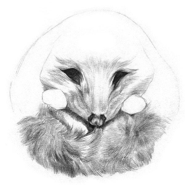 素描小刺猬的绘画步骤六