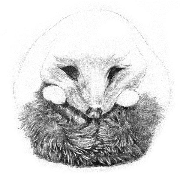 学画画 素描教程 素描动物 > 素描小刺猬的画法(5)      9,把整个身子