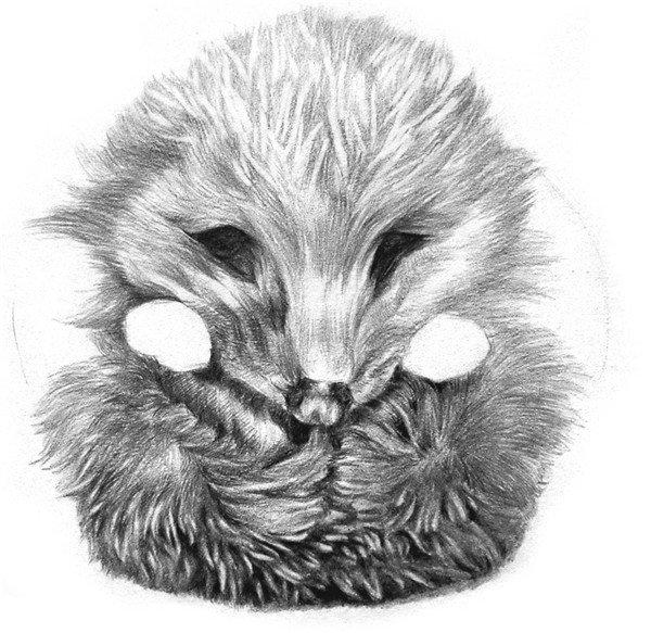 学画画 素描教程 素描动物 > 素描小刺猬的画法(6)      11,和刚才一