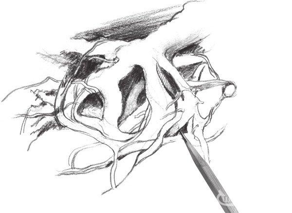 速写树根的绘画教程(3)
