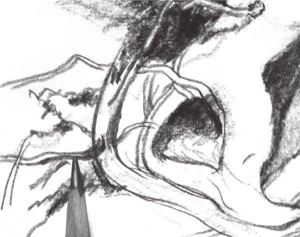 速写树根的绘画教程(4)