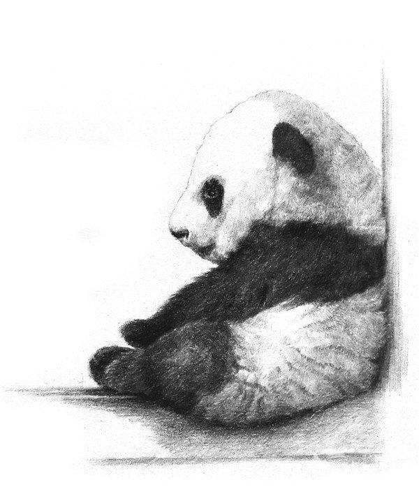 步骤教程。  素描熊猫宝宝的完成图 1、轻轻打形,大致画出熊猫宝宝的头、身体、手臂和腿,头大约有整体的一半高,把熊猫宝宝坐着的窗框也画出来。  素描大熊猫的绘画步骤教程一 2、细致描绘出熊猫宝宝的身体轮廓和五官外形。  素描大熊猫的绘画步骤教程二 3、为了避免把黑色的四肢画成一团黑,没有体积感,先把四肢和耳朵的暗部打上阴影,表现出其圆鼓鼓的形态。  素描大熊猫的绘画步骤教程三