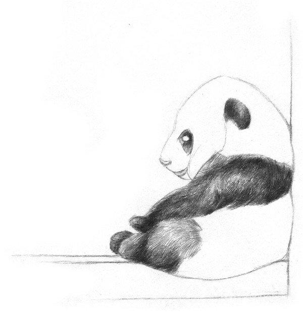 学画画 素描教程 素描动物 > 素描大熊猫的绘画步骤教程(2)      4
