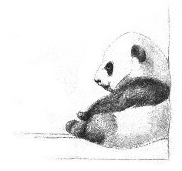 素描大熊猫的绘画步骤教程(2)