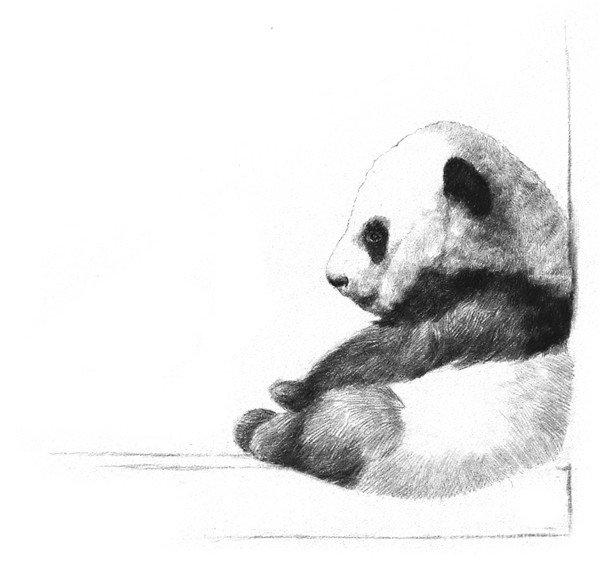 7、刻画一下脸部,用很轻的线条来绘制,用笔要短,加深一下前脚和身体连接的地方。  素描大熊猫的绘画步骤教程七 8、用短而轻的线条刻画一下头的后部,再加深一下前脚与身体连接、靠近背部的地方,把熊猫身上的毛色区分开。  素描大熊猫的绘画步骤教程八 9、刻画一下身上白色的毛发,加深身体周围靠着的墙面和台阶,体现出熊猫宝宝的存在感。  素描大熊猫的绘画步骤教程九 10、最后整体加深一下四肢,一只可爱的熊猫宝宝就画好了。  素描大熊猫的绘画步骤教程十 上面就是素描熊猫宝宝的所有绘画技法,对素描感兴趣的朋友们可以继续