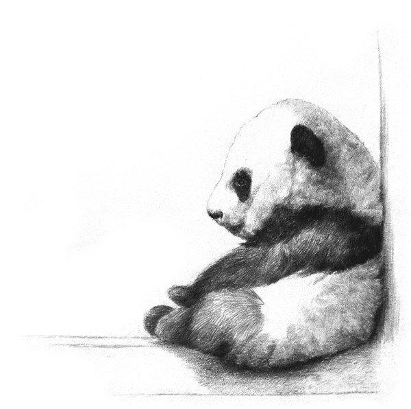 学画画 素描教程 素描动物 > 素描大熊猫的绘画步骤教程(3)      8,用