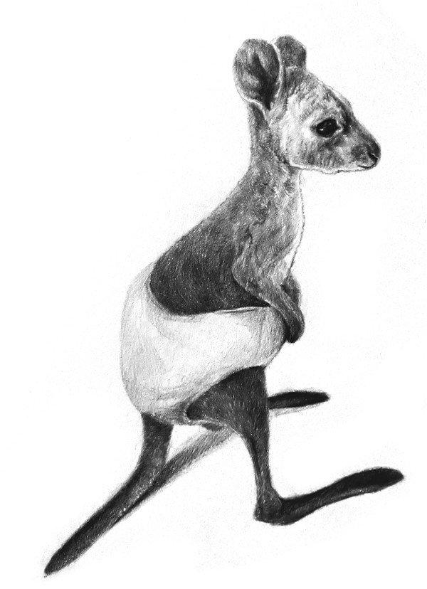 素描动物小袋鼠的绘画步骤教程