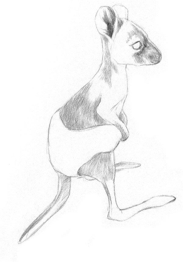 素描动物小袋鼠的绘画步骤教程_素描教程_学画画_我爱