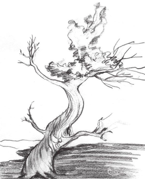 1、用简单的线条将树的大致结构和暗部表现出来,注意树的纹理也要大致表现出来。  速写老树的技法步骤一 2、修改树的轮廓线,并强调暗部的线条,注意老树的暗部纹理的表现。  速写老树的技法步骤二 3、添加树枝,注意画的时候该细的地方要细一点,和纹理的线条区分开。  速写老树的技法步骤三 4、添加阴影和树的暗部细节,并用重线条将树刻画出来,注意树根的表现。