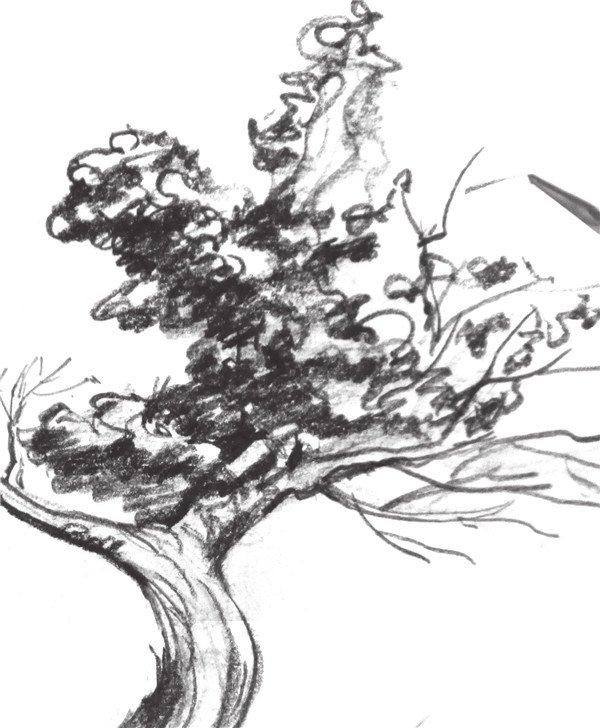 学画画 速写教程 速写场景 > 速写老树风景技法教程(2)      5,添加