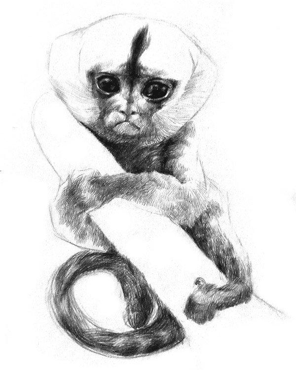 学画画 素描教程 素描动物 > 素描小眼镜猴的绘画步骤(4)      8,粗略
