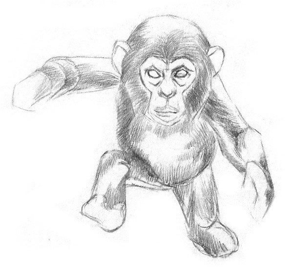 学画画 素描教程 素描动物 > 素描猩猩宝宝的绘画步骤(2)