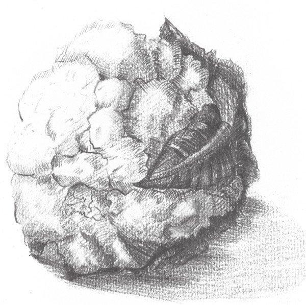 素描菜花的绘画步骤七