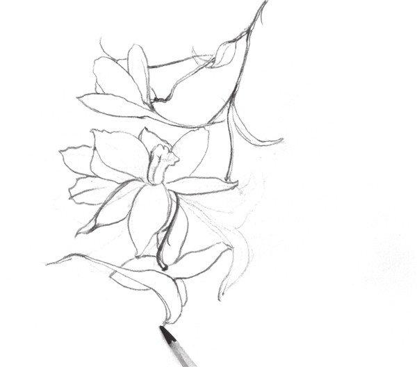 速写喇叭花的画法步骤七