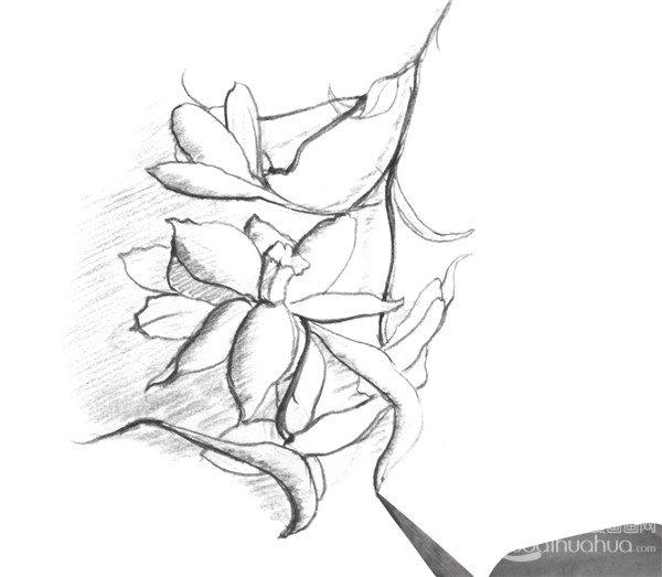 花朵铅笔手绘黑白
