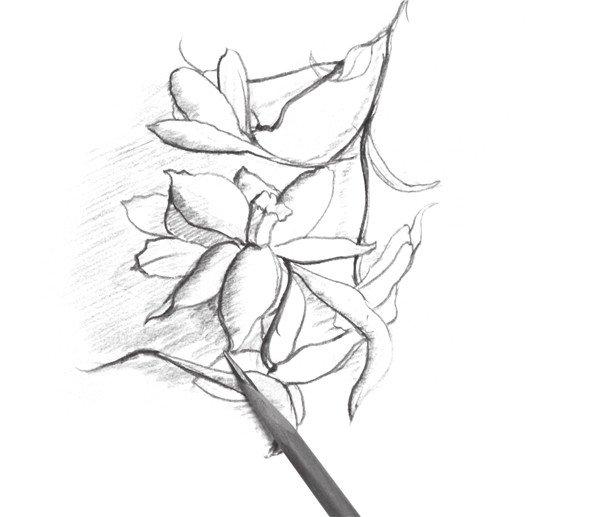 1、用虚线将喇叭花的大致造型绘制出来,在画的时候要注意画面的构图。  速写喇叭花的画法步骤一 2、修改轮廓线,将花朵和叶子的造型清晰化,注意铅笔要削尖,线条要细腻。  速写喇叭花的画法步骤二 3、修改叶子的造型,在画的时候注意叶子的生长姿态,及画面的整体美感。  速写喇叭花的画法步骤三 4、将叶子的轮廓修改,画出叶子及花朵的造型,并进行细化,注意花瓣的不同变化。  速写喇叭花的画法步骤四 5、添加画面的细节,并用加深轮廓线的方式来体现体积感。  速写喇叭花的画法步骤五 注意定出形体的大的比例,画出内部结构