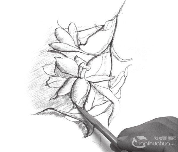 速写喇叭花的画法步骤十一-速写入门 强调速写画面的节奏感 2图片