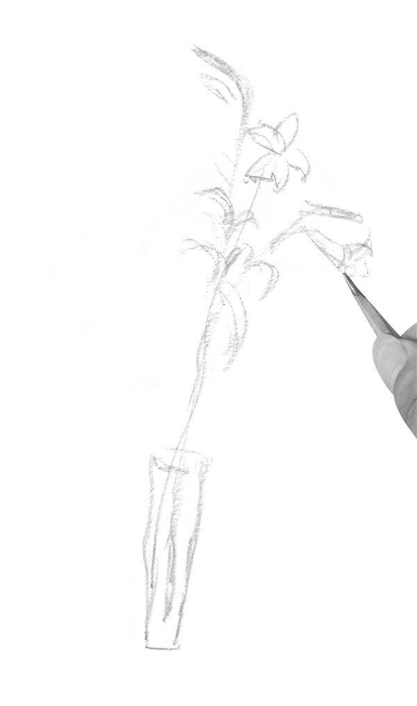 速写百合花的绘画教程图片