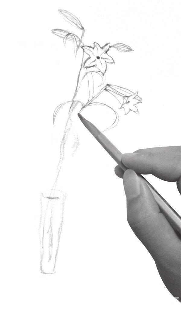 速写百合花的绘画步骤二