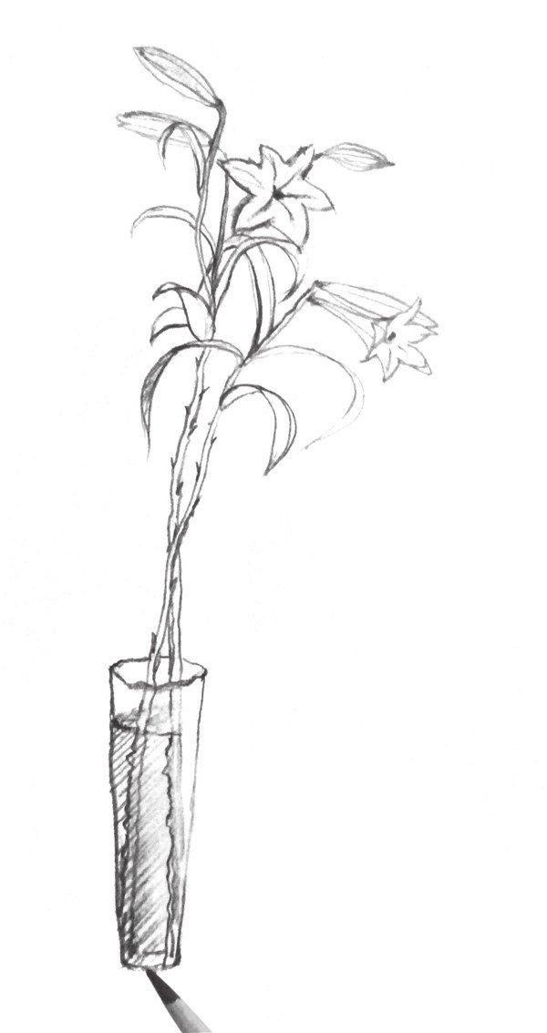 速写百合花的绘画步骤六