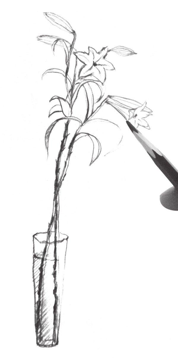 速写百合花的绘画教程(4)_学画画_我爱画画网