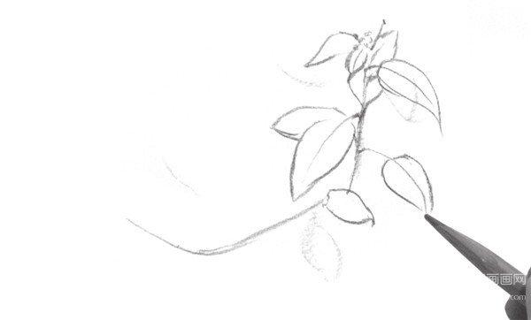1、用虚线大致勾勒出叶子的轮廓线条。在画的时候要注意叶子的生长姿态。  速写叶子的绘画步骤一 2、沿着枝干的走向去绘制叶子。  速写叶子的绘画步骤二 3、刻画出分支的枝干叶子,注意叶子形态不要太一致,注意变化。  速写叶子的绘画步骤三 4、继续细化叶子部分,丰富画面,注意用笔的变化及细节的深入刻画。  速写叶子的绘画步骤四