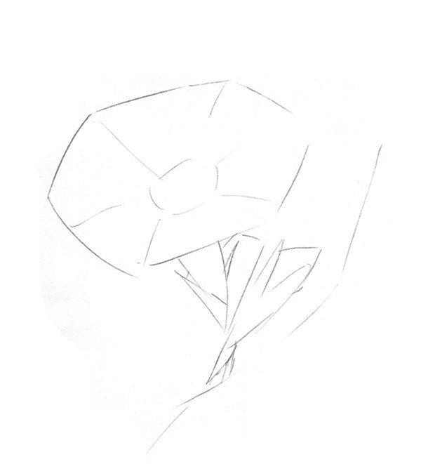 素描教程 静物素描 > 素描喇叭花的绘画教程      喇叭花(又名牵牛花)