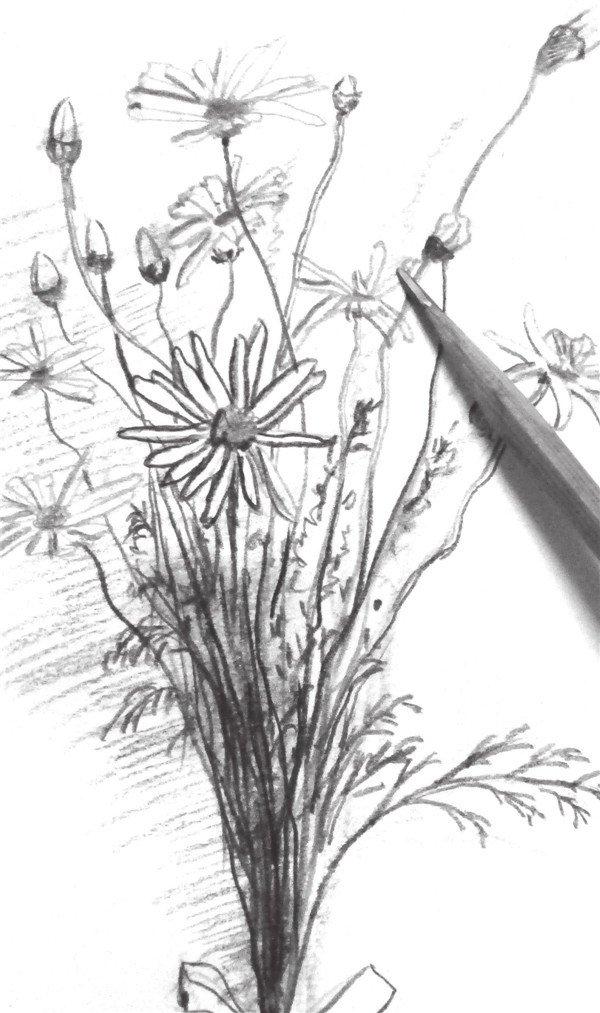 速写一束花的绘画步骤(6)
