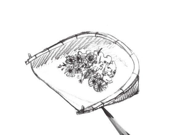 学画画 速写教程 > 速写簸箕与花的绘画教程(4)      7,继续修饰簸箕