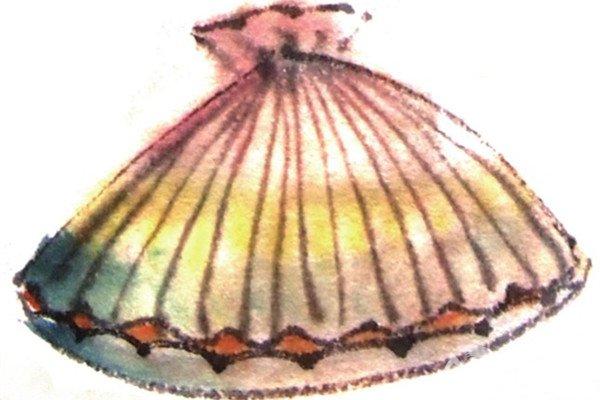 国画贝壳的绘画技法