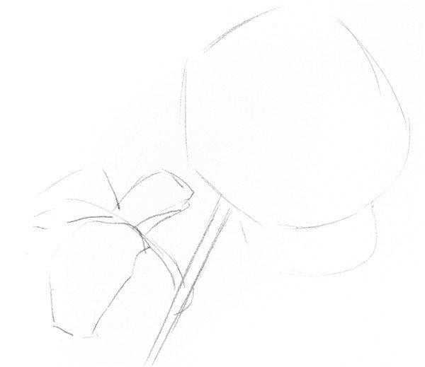 素描白玫瑰的绘画步骤一