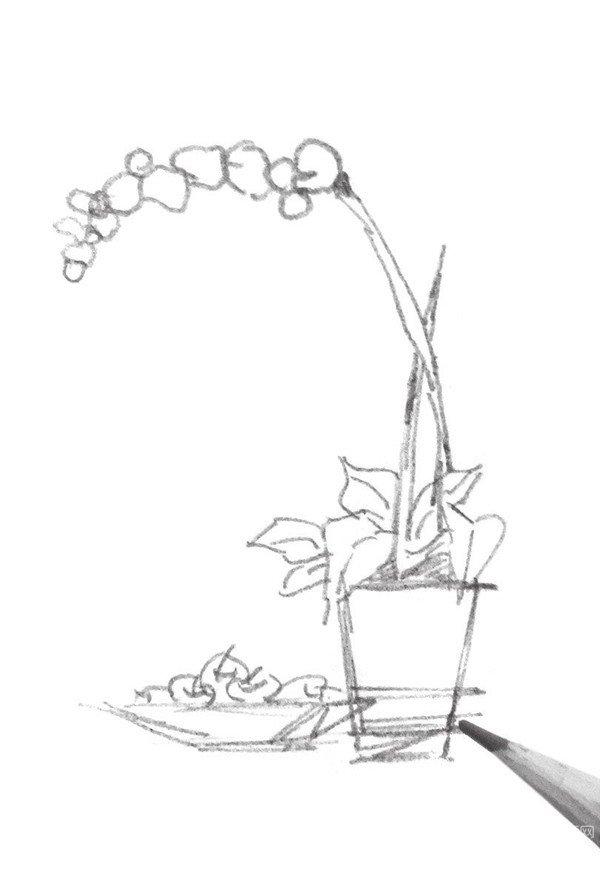 速写植物花盆细节