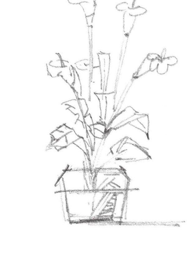 1、从花朵的部分向下刻画花的枝干,并确定其整体的位置。  速写盆栽的技法步骤一 2、刻画出其他花朵和枝叶部分,同时刻画出花盆的大体轮廓。  速写盆栽的技法步骤二 3、接着再来刻画花盆附近的静物,要注意周围静物与盆栽的前后和上下关系。  速写盆栽的技法步骤三 4、强化画面上景物的线条并添加以线条与阴影,增加画面的体积感,盆栽就完成了。  速写盆栽的技法步骤四 对于速写初学者来说,多练练是进步的好方法,赶紧拿起手中的笔来试试吧!