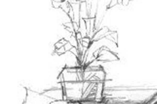 素描初级花朵图片步骤
