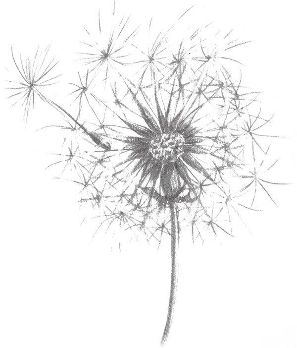 7,用尖一点的笔放状地画出蒲公英的花瓣,这部分就能体现出蒲公英