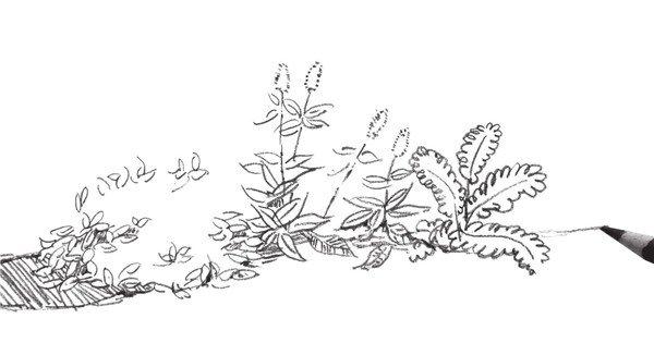 北京画室_速写路边植物的绘画步骤