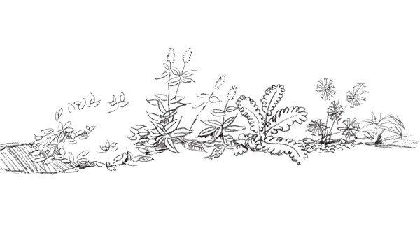 速写路边植物的绘画步骤(4)