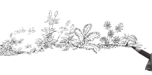 速写路边植物的绘画步骤(6)
