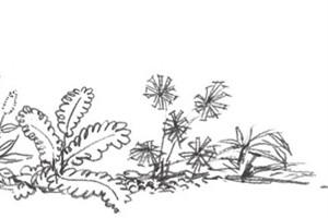速写路边植物的绘画步骤