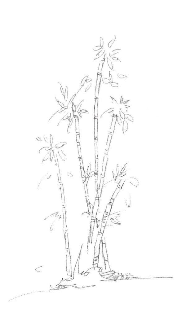 速写竹子的画法步骤三