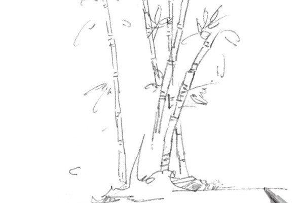 速写竹子的绘画技法