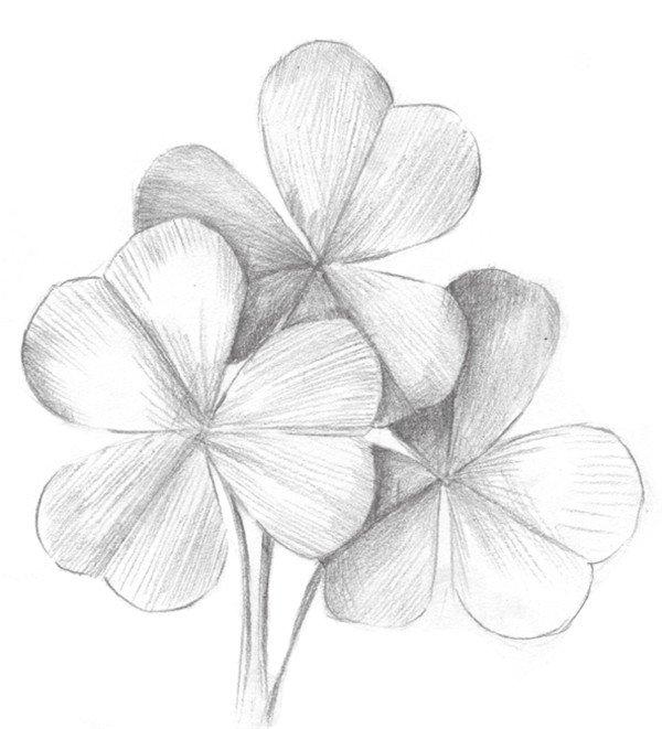 素描三叶草的绘画教程(3)_素描教程_学画画_我爱画画网