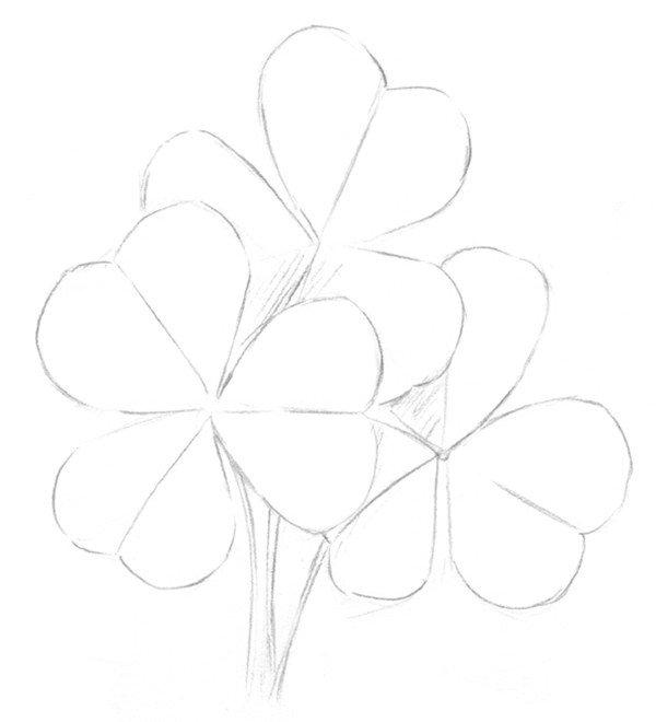 素描三叶草的绘画教程(2)图片